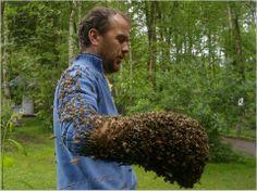 Honey Bee wirklich - 14103